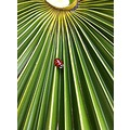 LADY BIRD ON PALM TREE LEAF