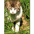 springfriday cat nature wildlife grass France animal milibuhscatclub