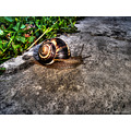 snail hdr closeup animal nature