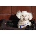 dog poddle relaz bag pet