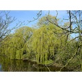 netherlands beesd water tree nethx beesx waten treex