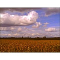 landscape field corn bush tree blue sky clouds hill before storm