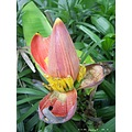 flower bangkok thailand nature tropical poulets