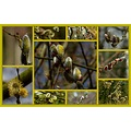 collage2friday catkins