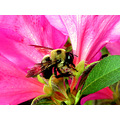 bee insect nature flower flowers macro