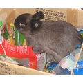 Tiny Bunny in the feedbox rabbit pet