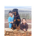 kids children family rottweiler dog animal pet mount dale perth