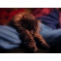 Canon Powershot A80 cat cats sleep
