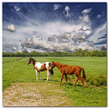 netherlands sgraveland animal horse cloudwednesday nethx sgrax animx horsx