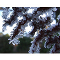 Ice Crystals in super macro mode on a fern frond - along the south trail late this afternoon wher...