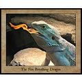 Fire Breathing Bearded Dragon