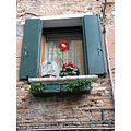 venezia venice italy birdcage bird flower window