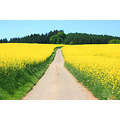 rapeseed landscape nature luxembourg