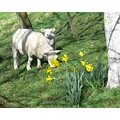 animalmonday springtime
