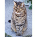 moggy cat feline animal mammal pet family