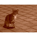 cat sepia yard 2009 perth littleollie