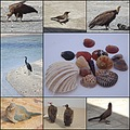 Gambia birds seashells