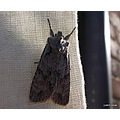 smoothfriday funfriday moth