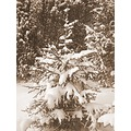 seepia winterstorm snow tree