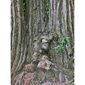 armstrongredwoodsfph armstrong redwoods trail burl burls bark redwood