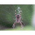 macro spider autumn