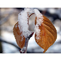 iran autumn snow nature macro