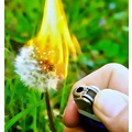dandelion flower fire burn