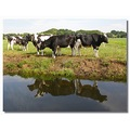 netherlands kortenhoef animal cow reflectionthursday nethx kortx animx cowx