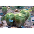 zespook lucknow india cactii