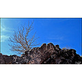 Nature Landscape Mountain Rock Tree Dry Sky Blue Iran Persia Khorasan