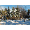 snow winter landscape winnipeg Canada