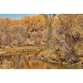 autumn fall foliage seineriver winnipeg canada