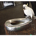 markets cockatoo donation drop cage safe perth littleollie