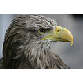 birdfriday eagle luxembourg