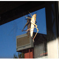 grasshopper climbing door perth littleollie