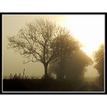 somersetdreams somerset nature mist tree