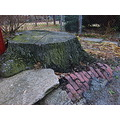 alley tree stump brick concrete chainlink fence