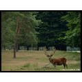 deer animal landscape nature CH1988