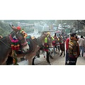 Colourfully decorated horses for hire on way to Vaishnodevi
