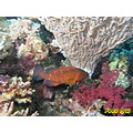 travel underwater hurghada egypt