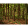 Forest Trees Staffordshire