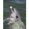 Dolphin porpoise animal mammal nature wildlife sealife