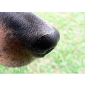 dog nose animal pet closeup