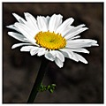 flower for you :-)