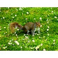 squirrel grass park nature green daisies animal wild SlowCheeetah