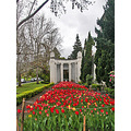 tulips spring cemetery cemeteryfph oakland