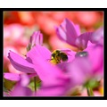 bumble bee insect colours colour nature flowers somerset somersetdreams