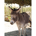 donkey animal wildlife