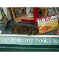 cat bookshop Whitby