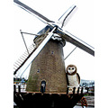 owl mill holland